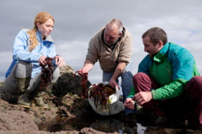Group of people gathering seaweed_1050949