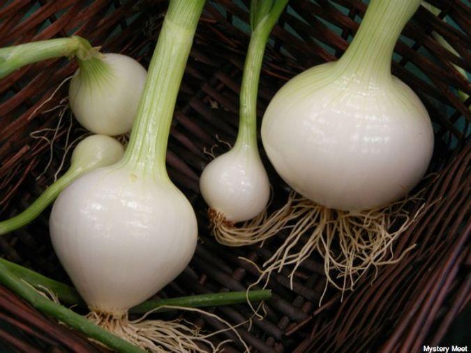 Vidalia onions (spring bulbs)