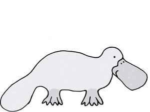 Illustration of a platypus by Alice Walters