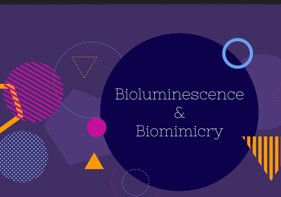 Students at Compass present project on bioluminescence and biomimcry