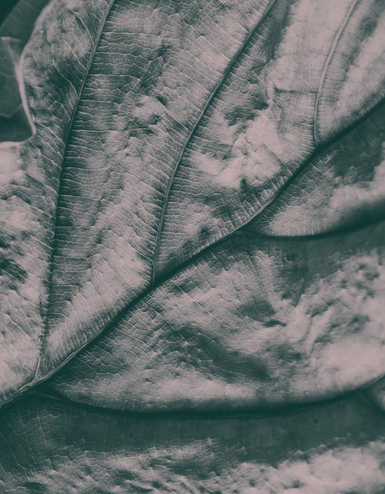 Close up image of a leaf