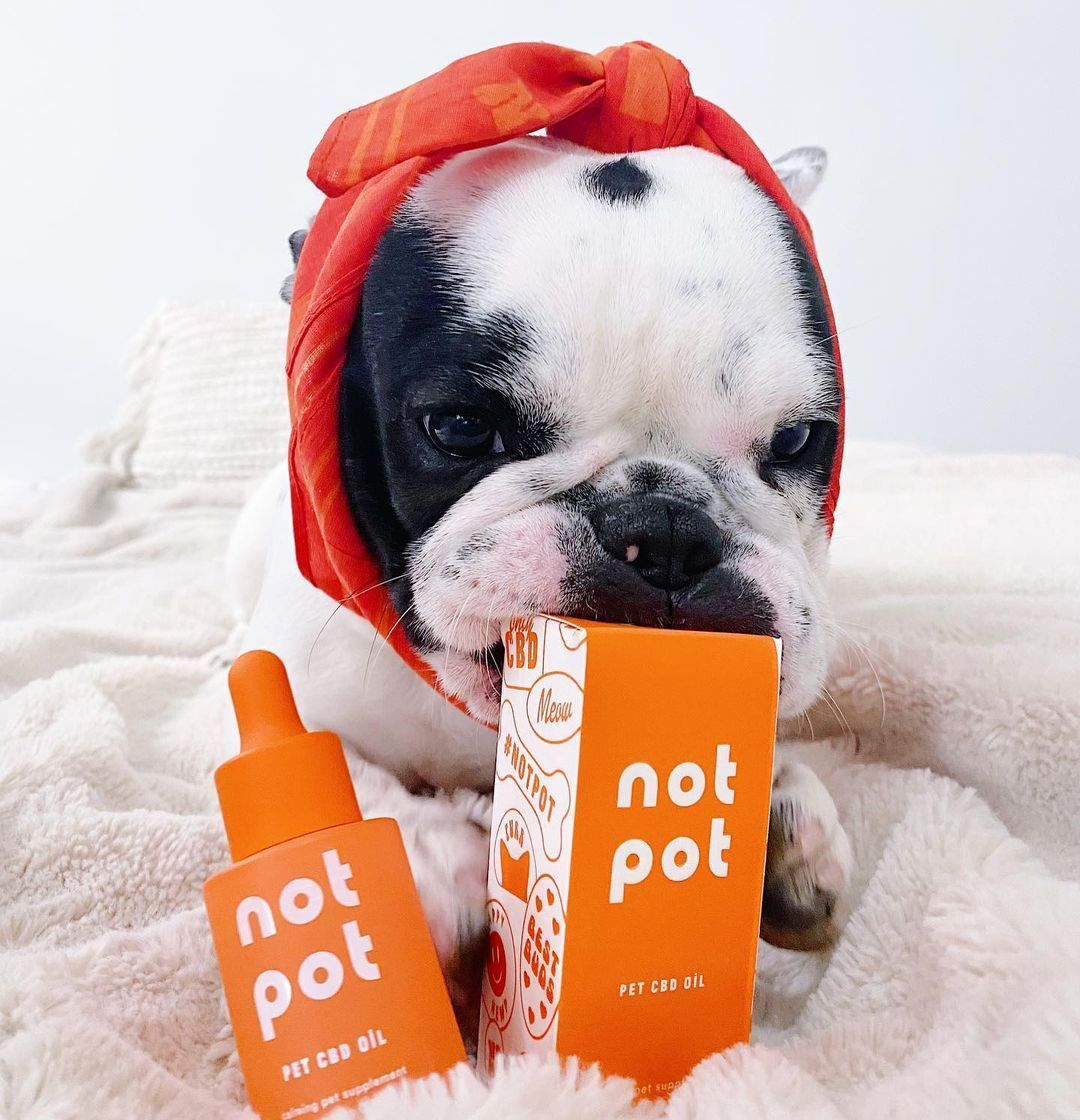 @winifred.the.frenchie