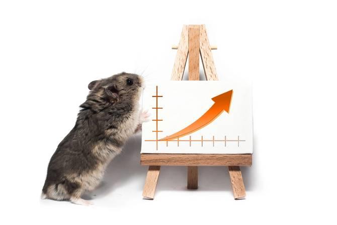 A hamster stands next to a chart bearing an upward arrow