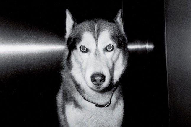Ricky Powell Dog 1