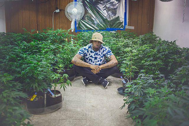 Akomplice Marijuana For The Future Collection 4