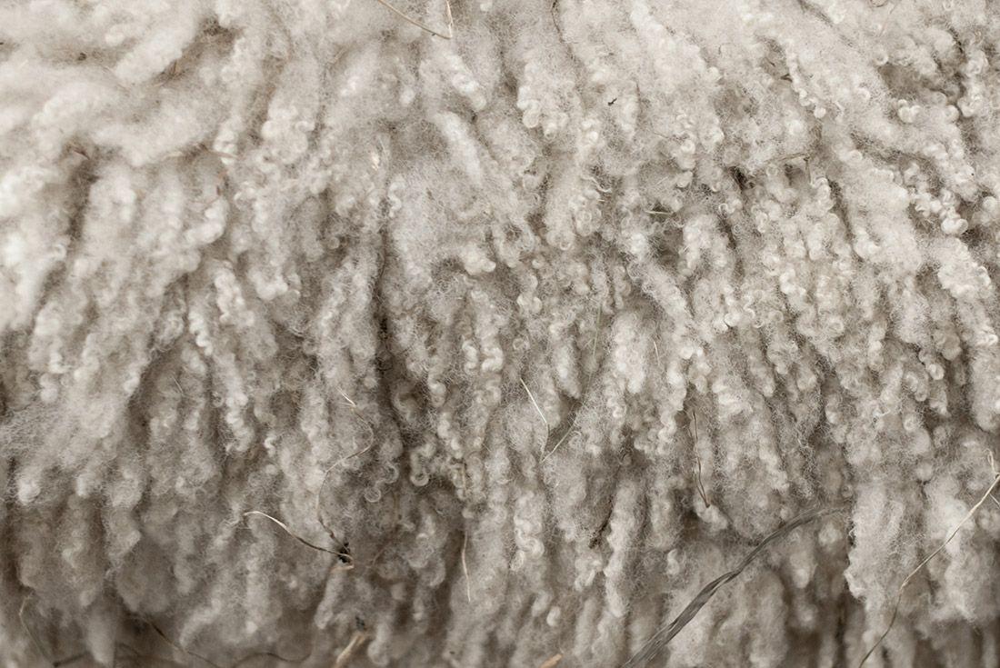 Material Matters History Of Wool Sneakers Wool 1