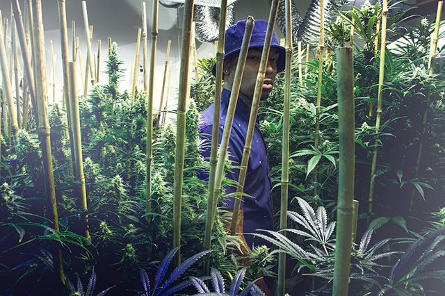 Akomplice Marijuana For The Future Collection 21