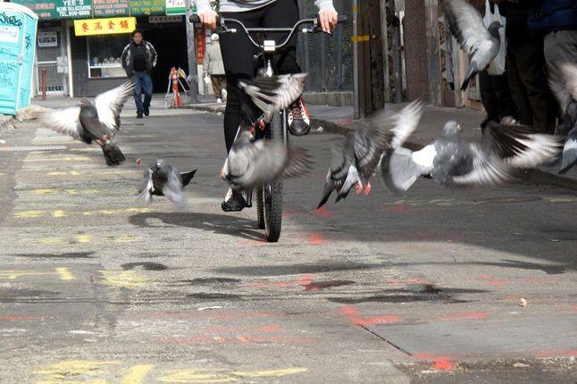 Eot Pigeons 1