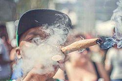 Akomplice Marijuana For The Future Collection Thumb