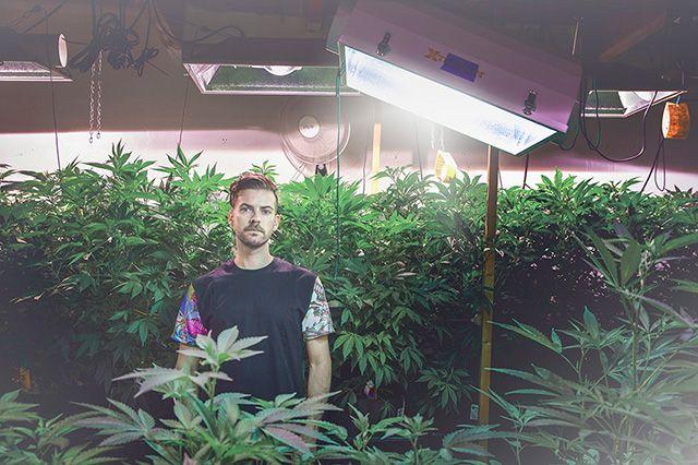 Akomplice Marijuana For The Future Collection 12