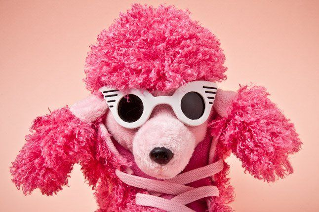Adidas Originals Js Poodles Sunnies 1