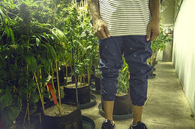Akomplice Marijuana For The Future Collection 22