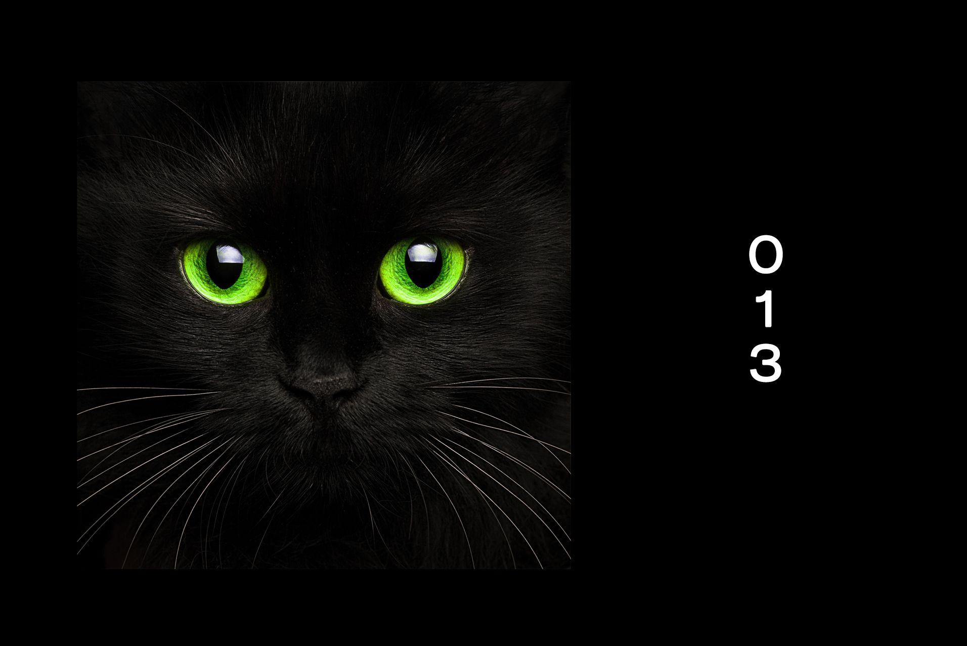 spotify cat