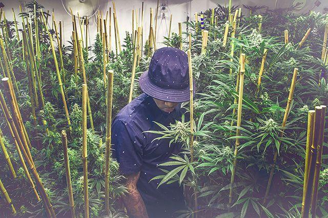 Akomplice Marijuana For The Future Collection