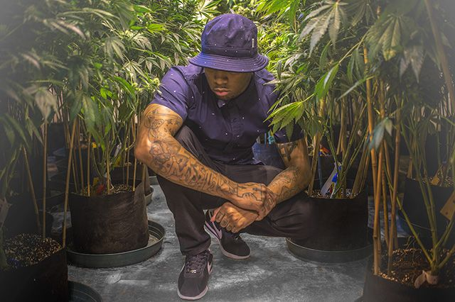 Akomplice Marijuana For The Future Collection 25