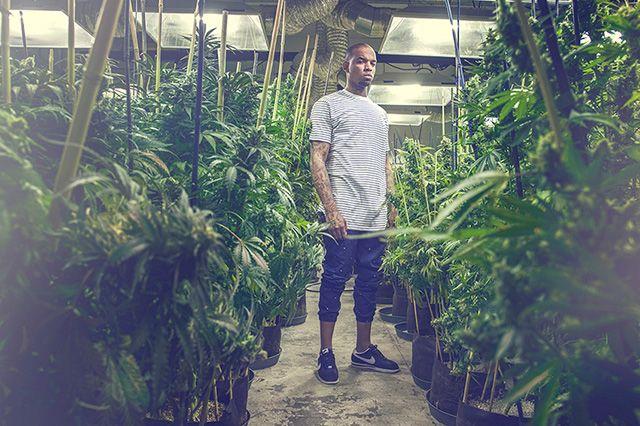Akomplice Marijuana For The Future Collection 13