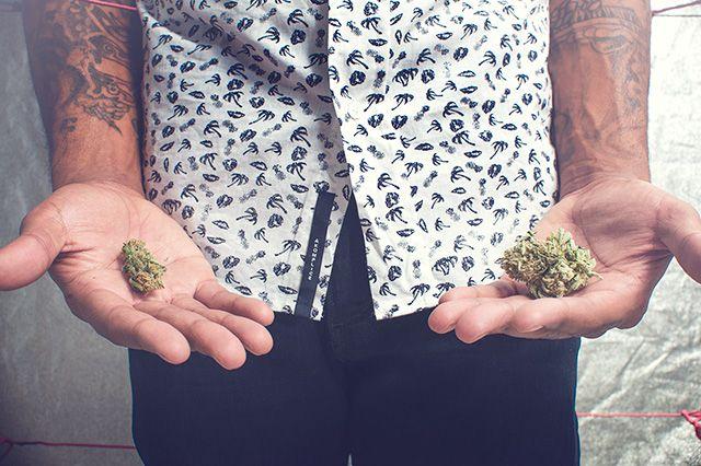 Akomplice Marijuana For The Future Collection 23
