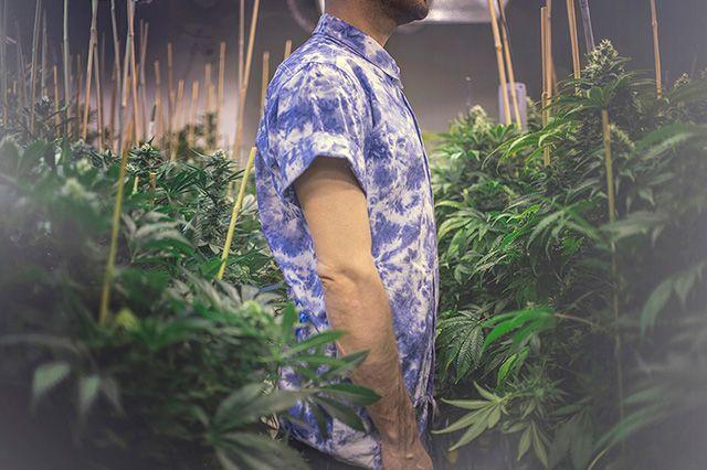 Akomplice Marijuana For The Future Collection 14
