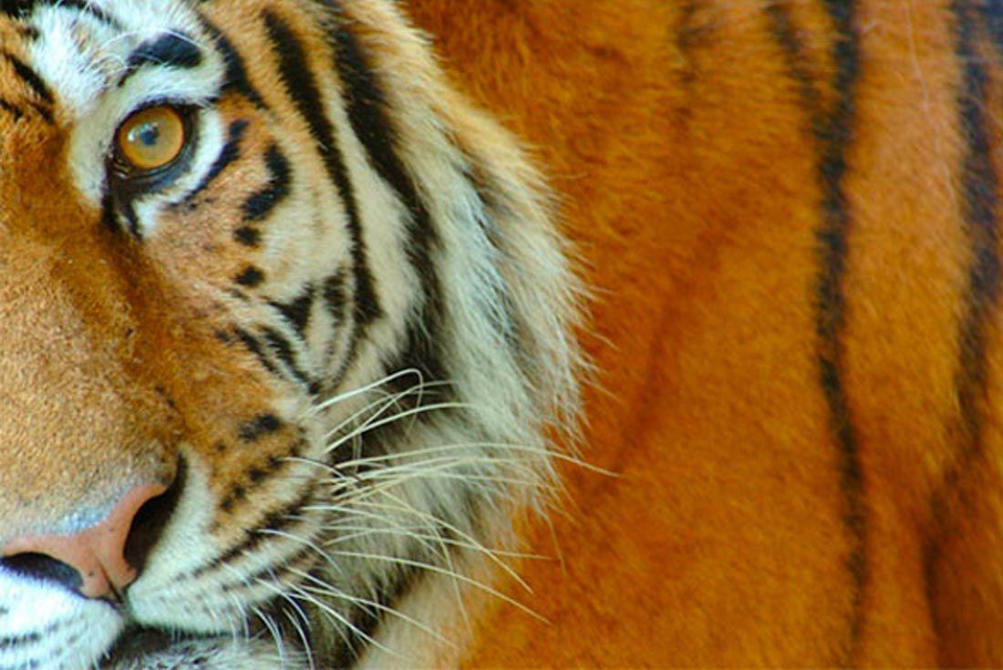 Asics Tiger Financial Report Q3 1