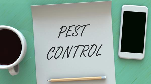 Pest Control written on paper with coffee mug pencil and smart phone around it