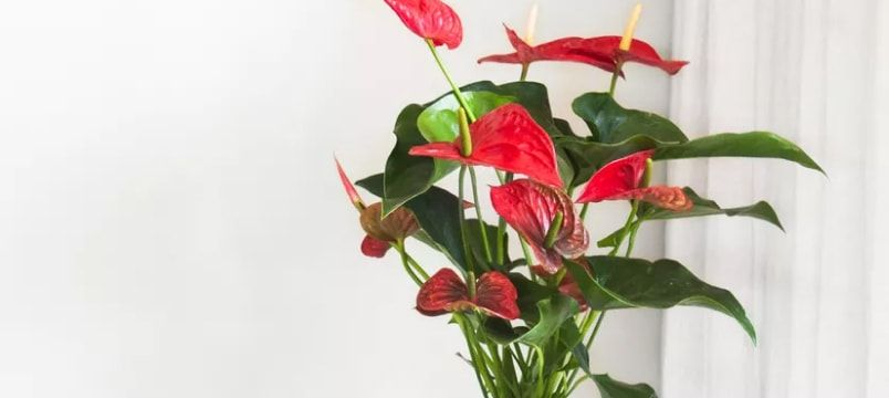 Best Indoor Plants by Continent (by Jeet Desai)