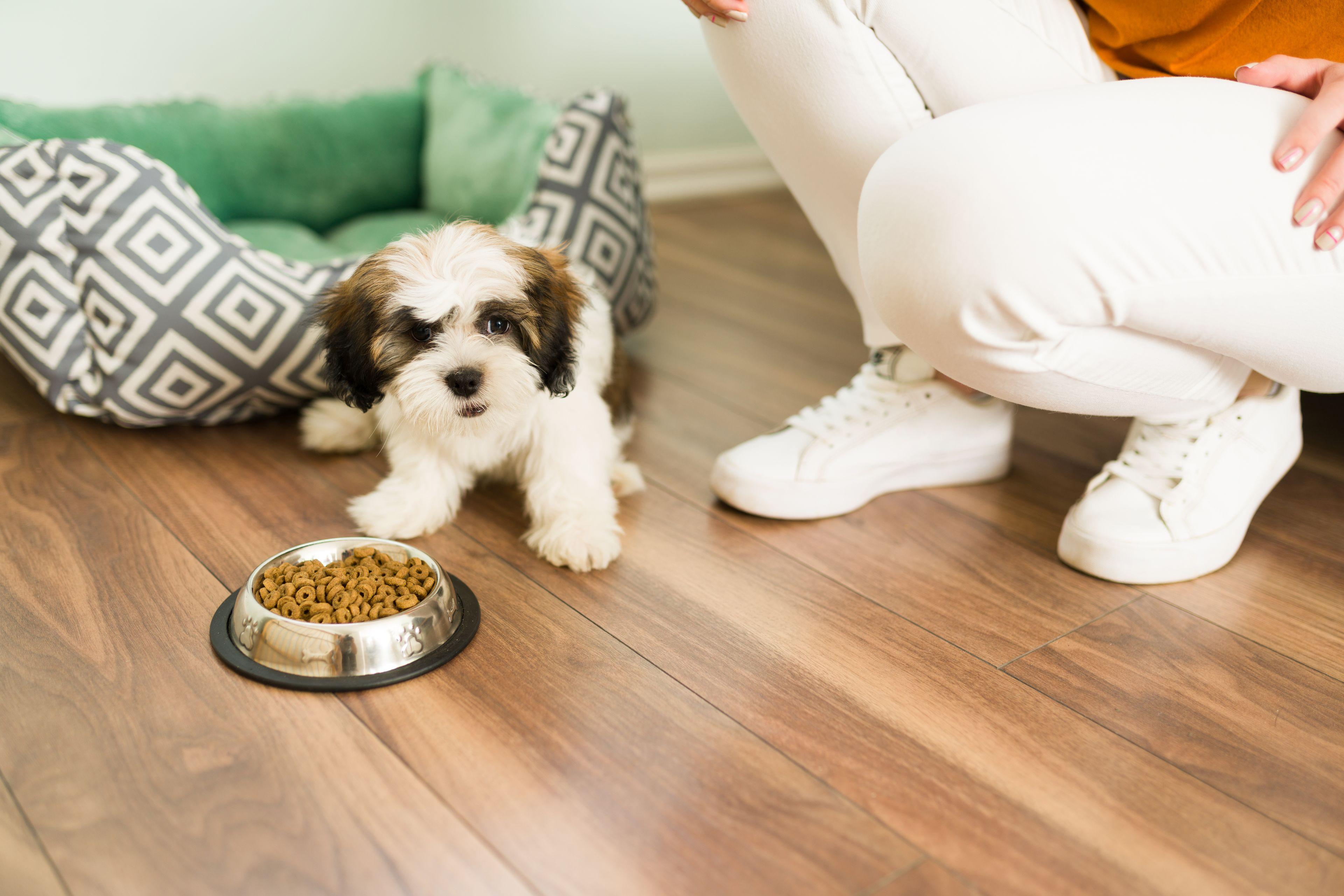 come alimentare i cani di piccola taglia