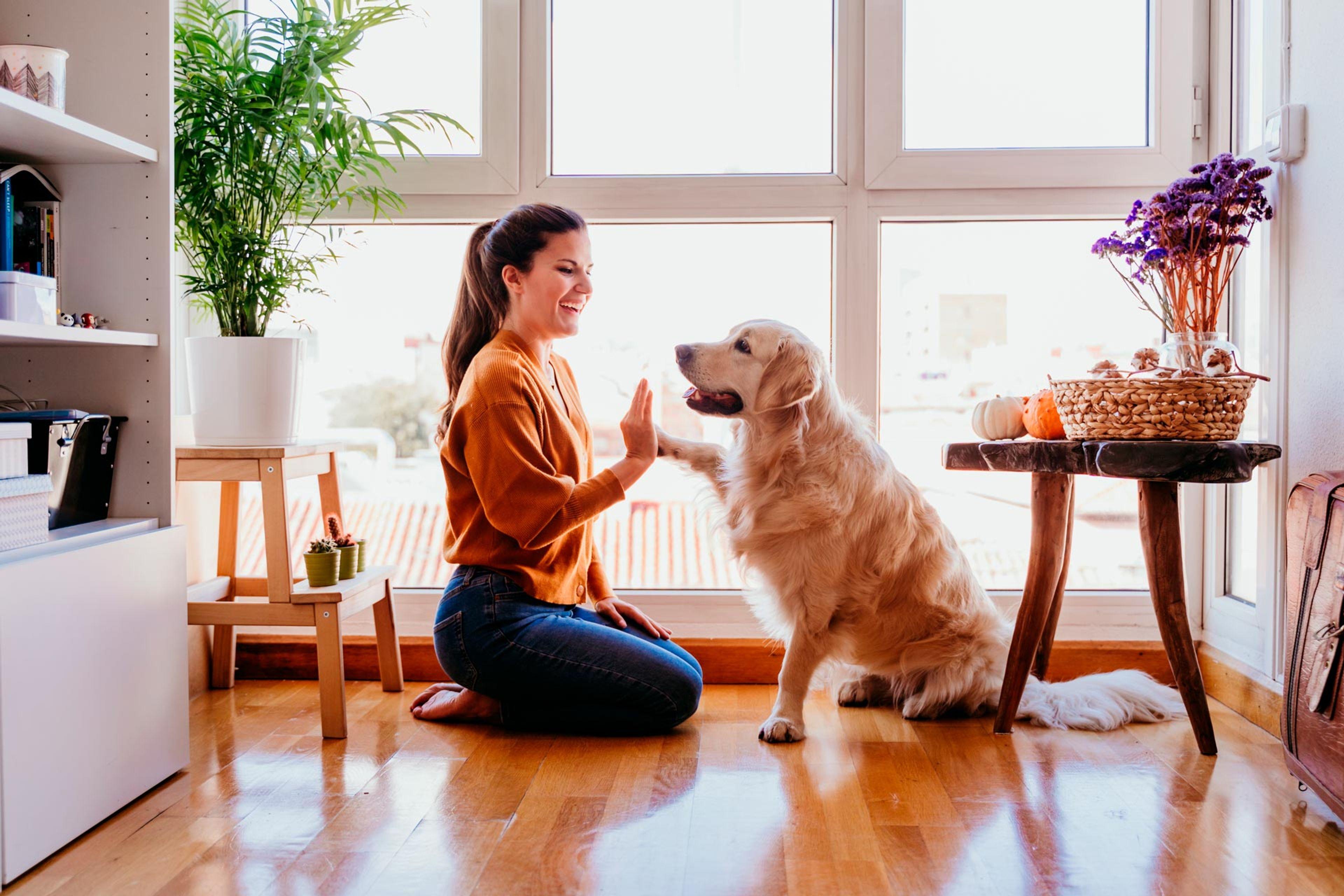 cane dà la zampa alla padrona