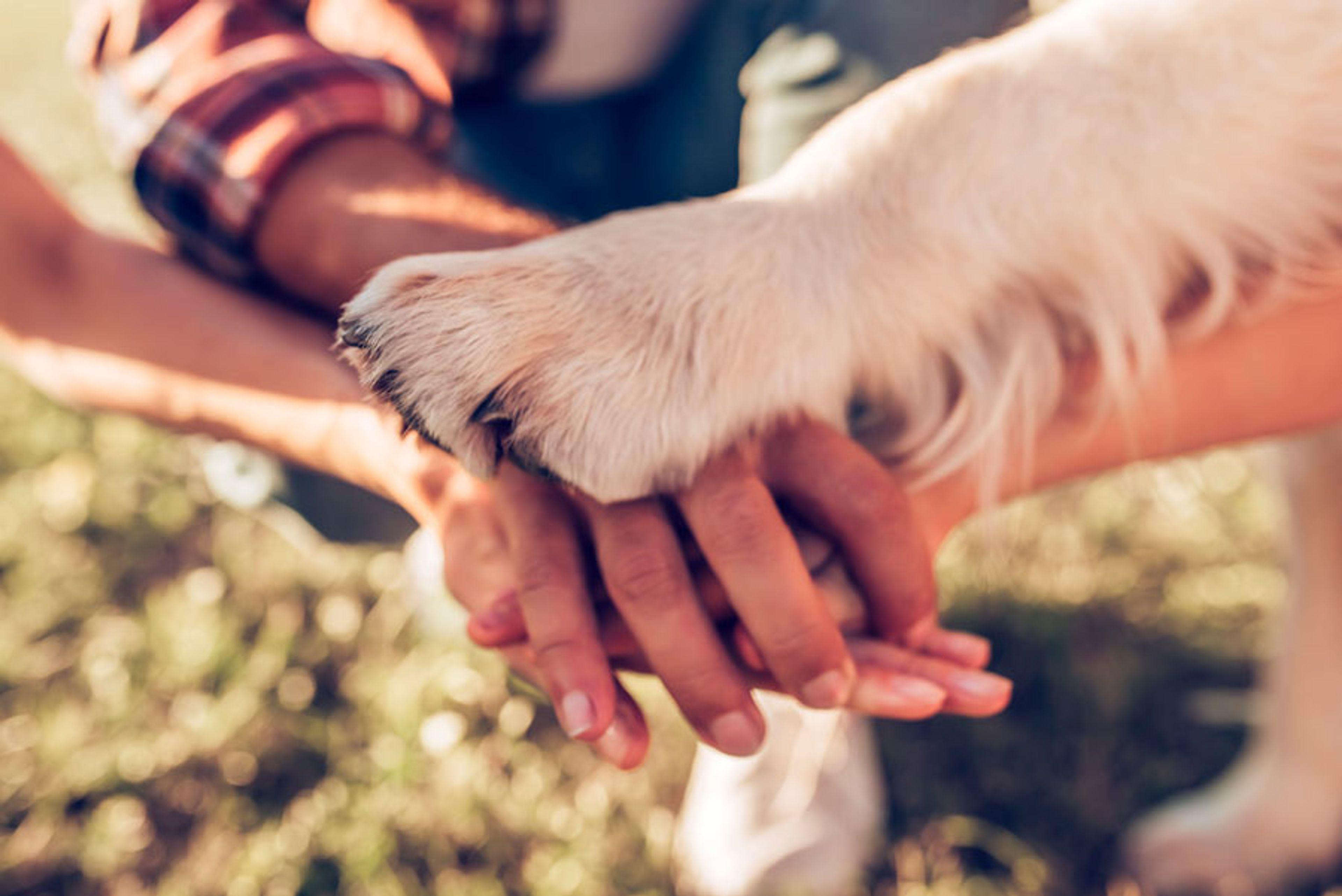 mani e zampa che si uniscono