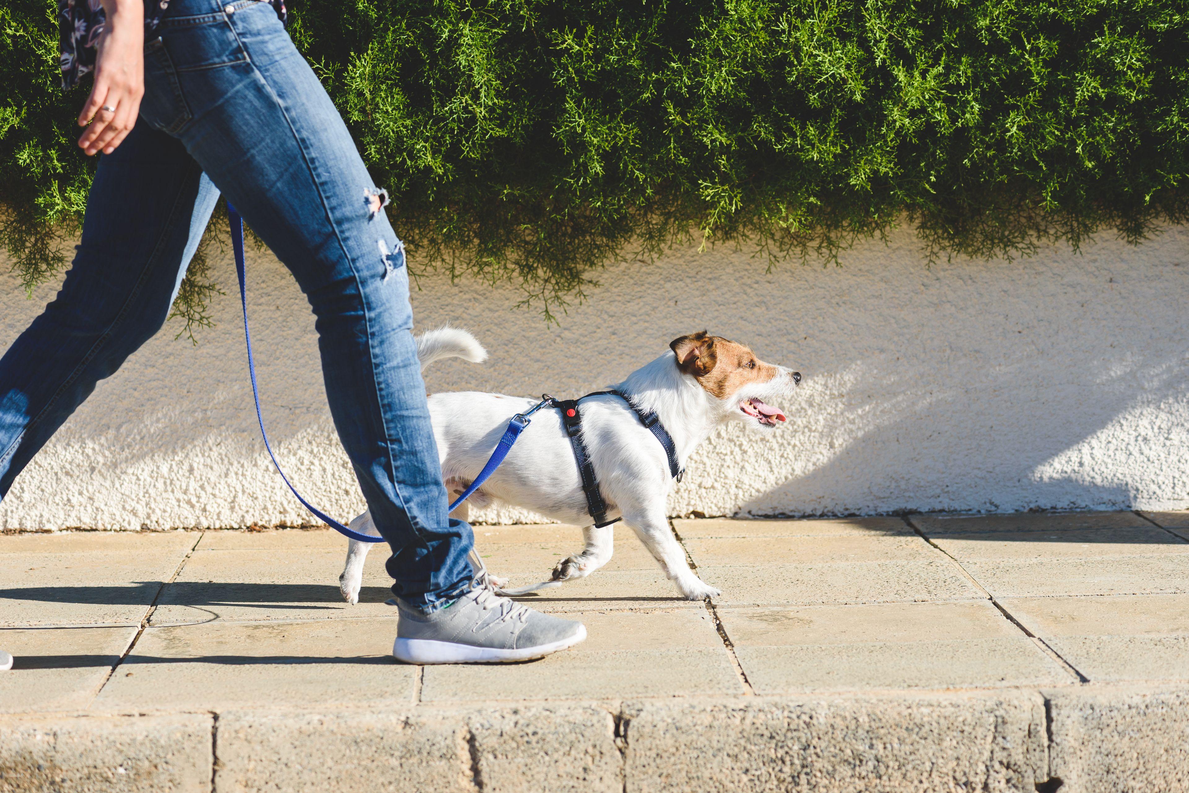 cane a passeggio con il padrone