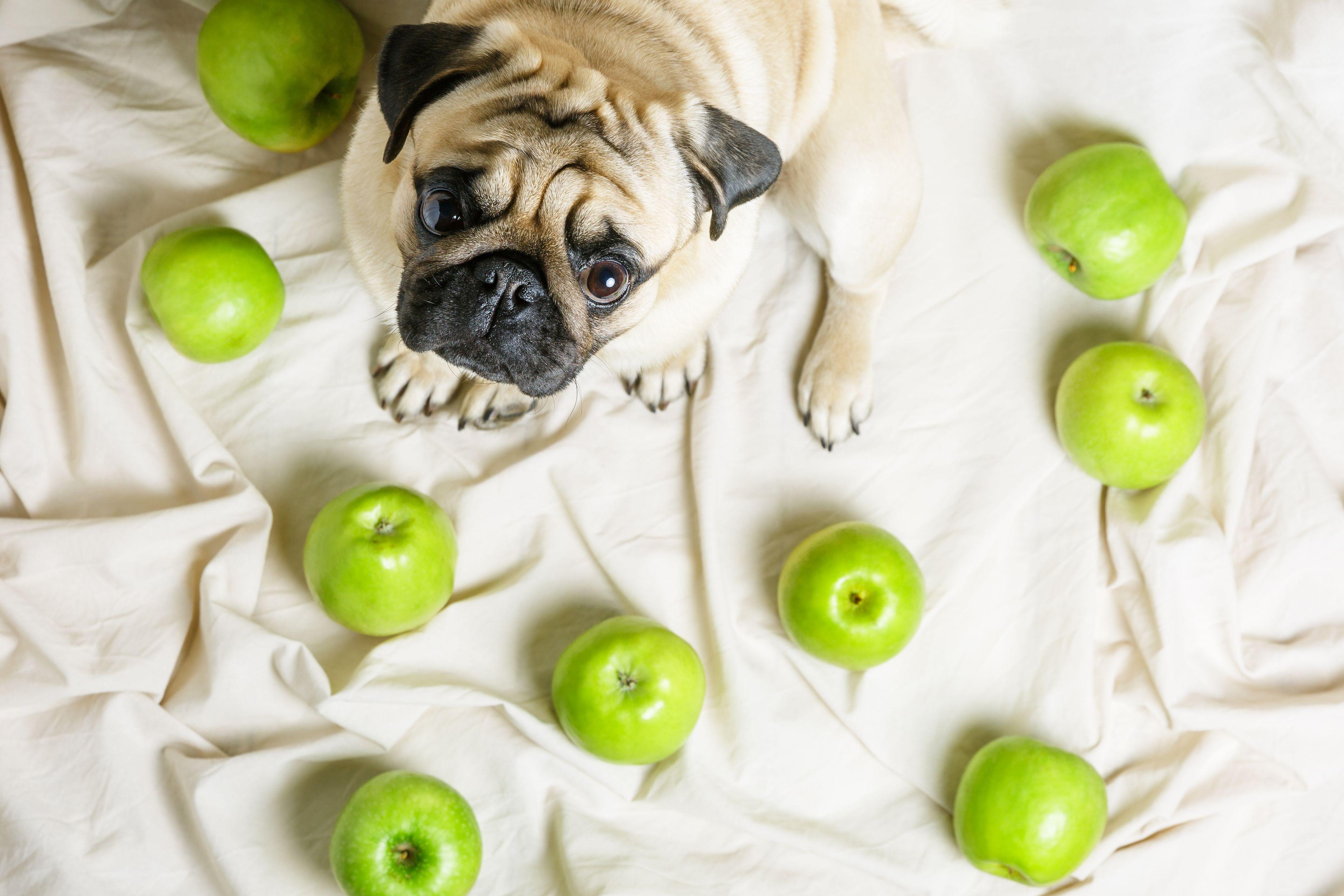benefici frutta per il cane