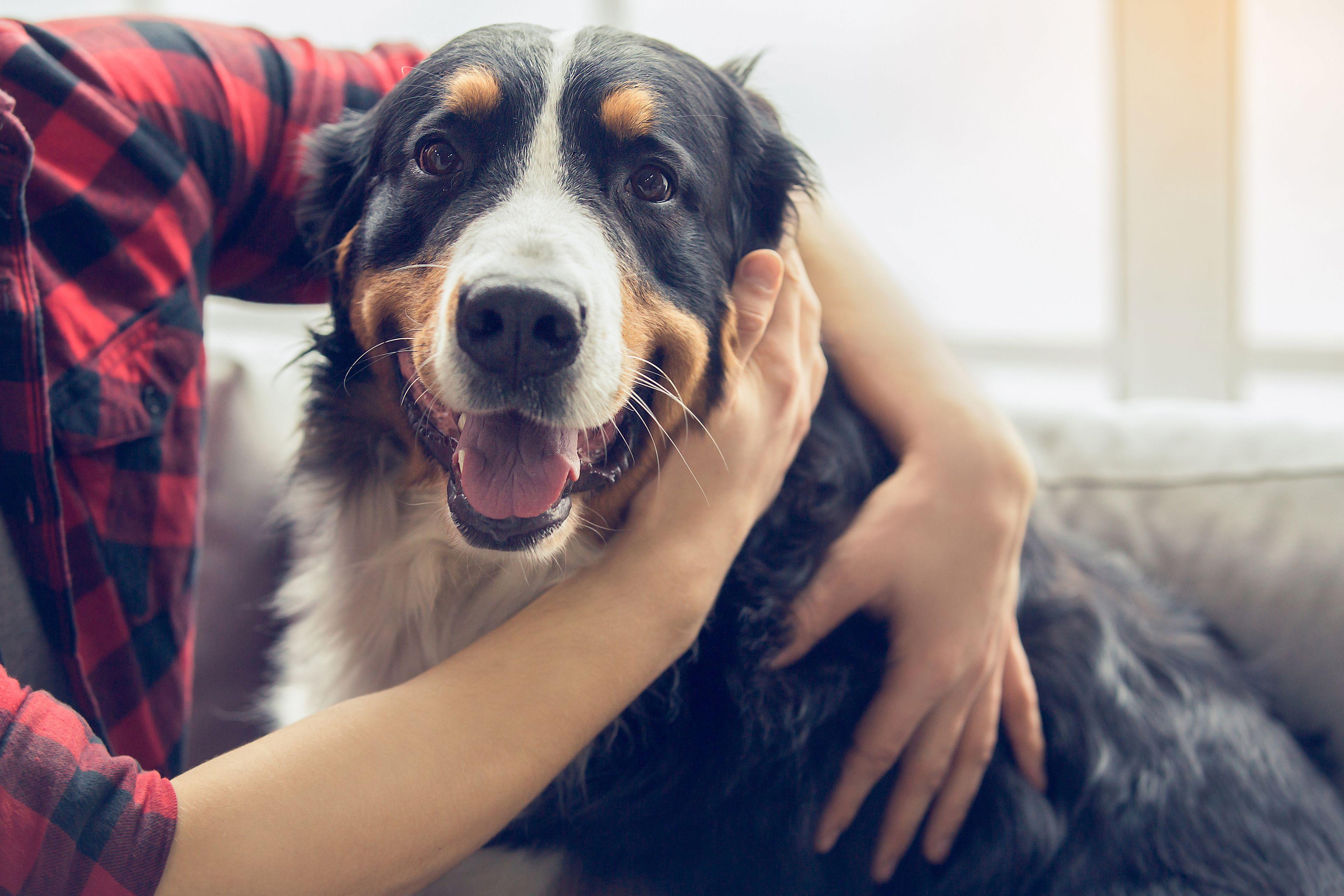 cane felice con il proprio padrone
