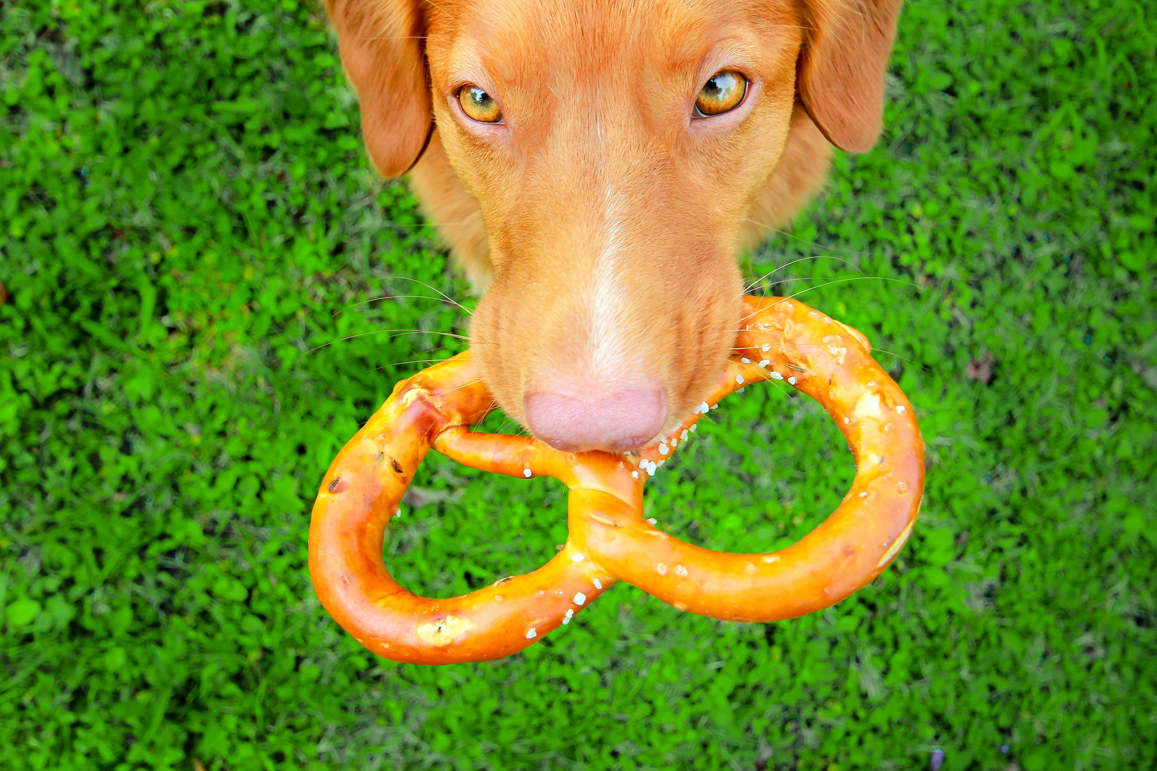 pretzel afferrato da un cane