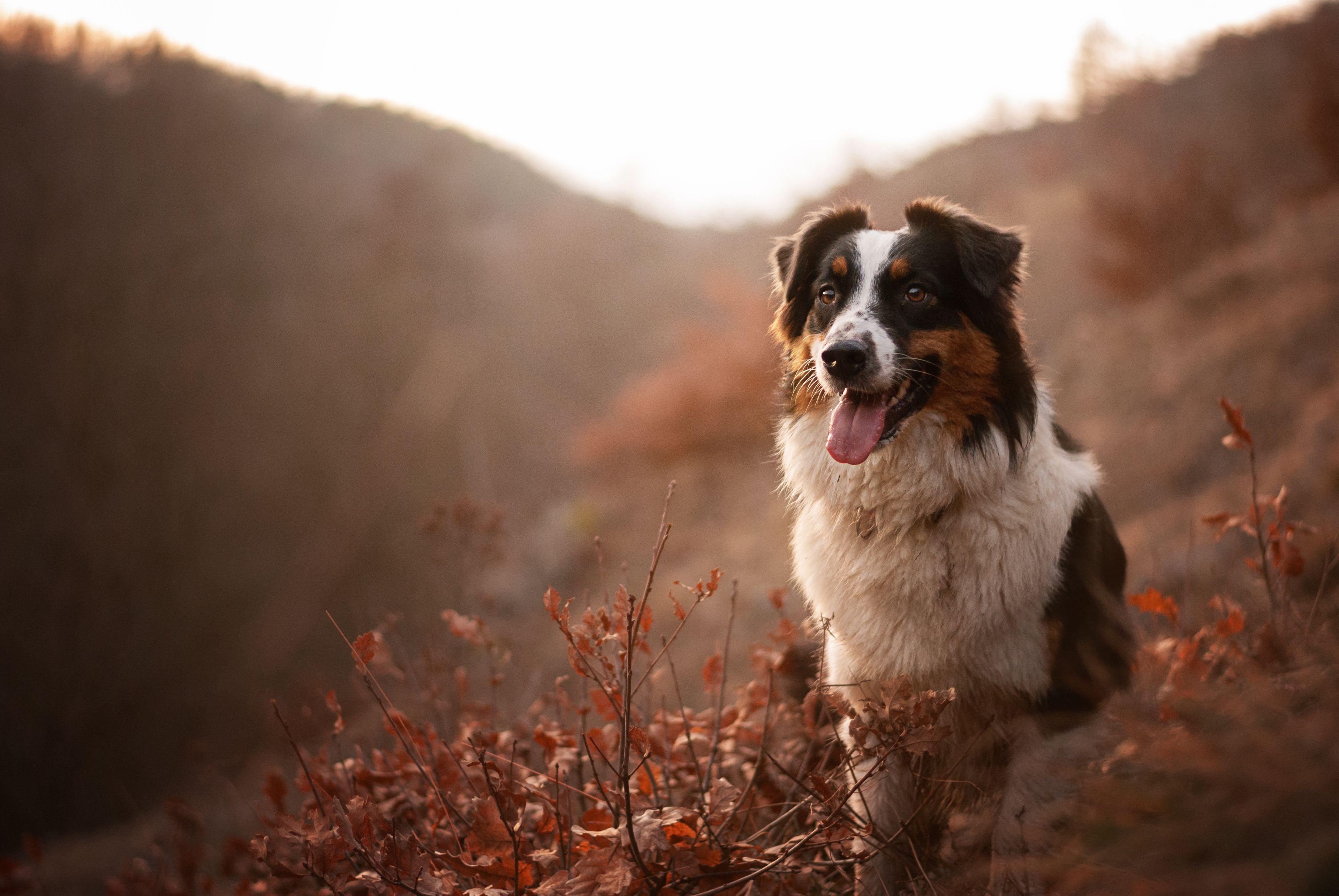 cane in natura