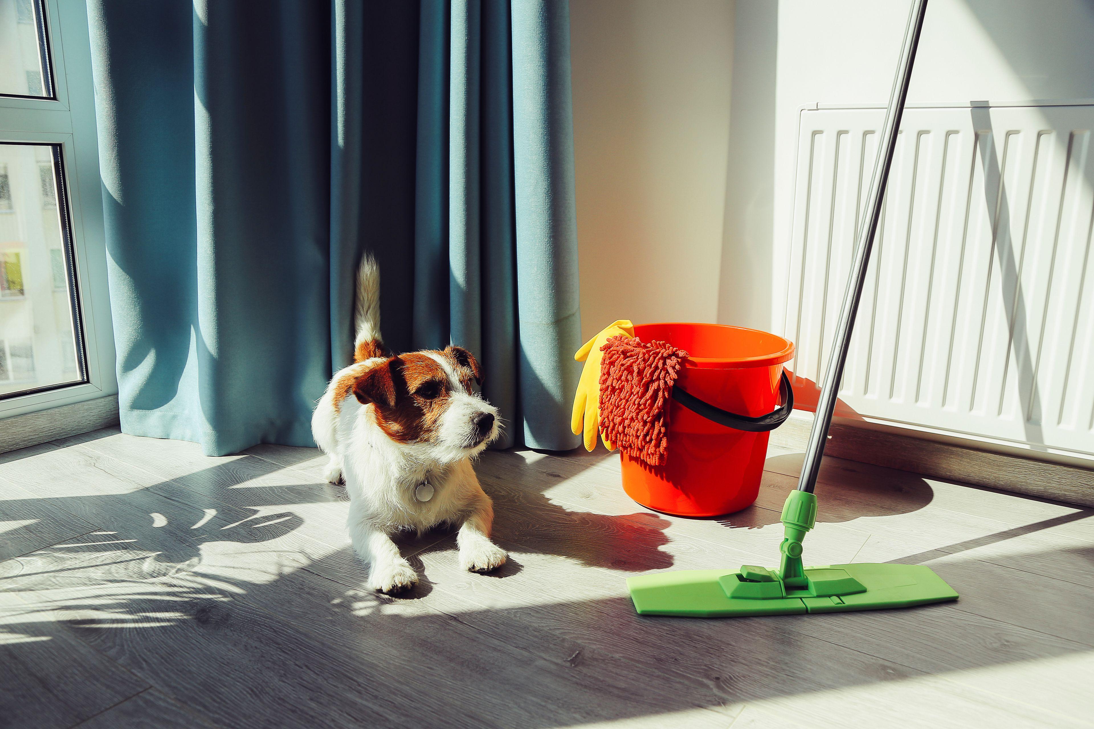 cane e pulizie della casa