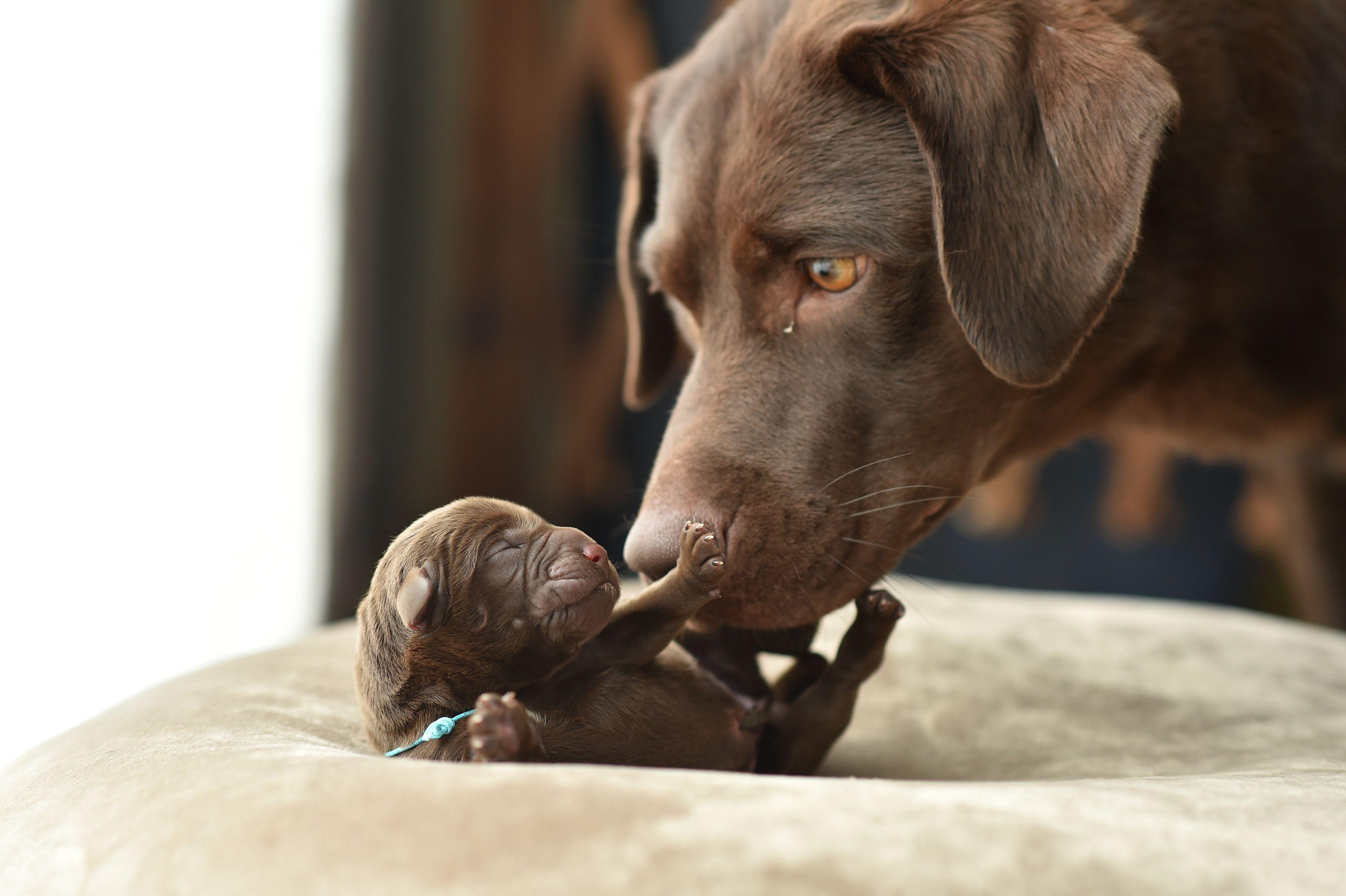 cane adulto con cucciolo