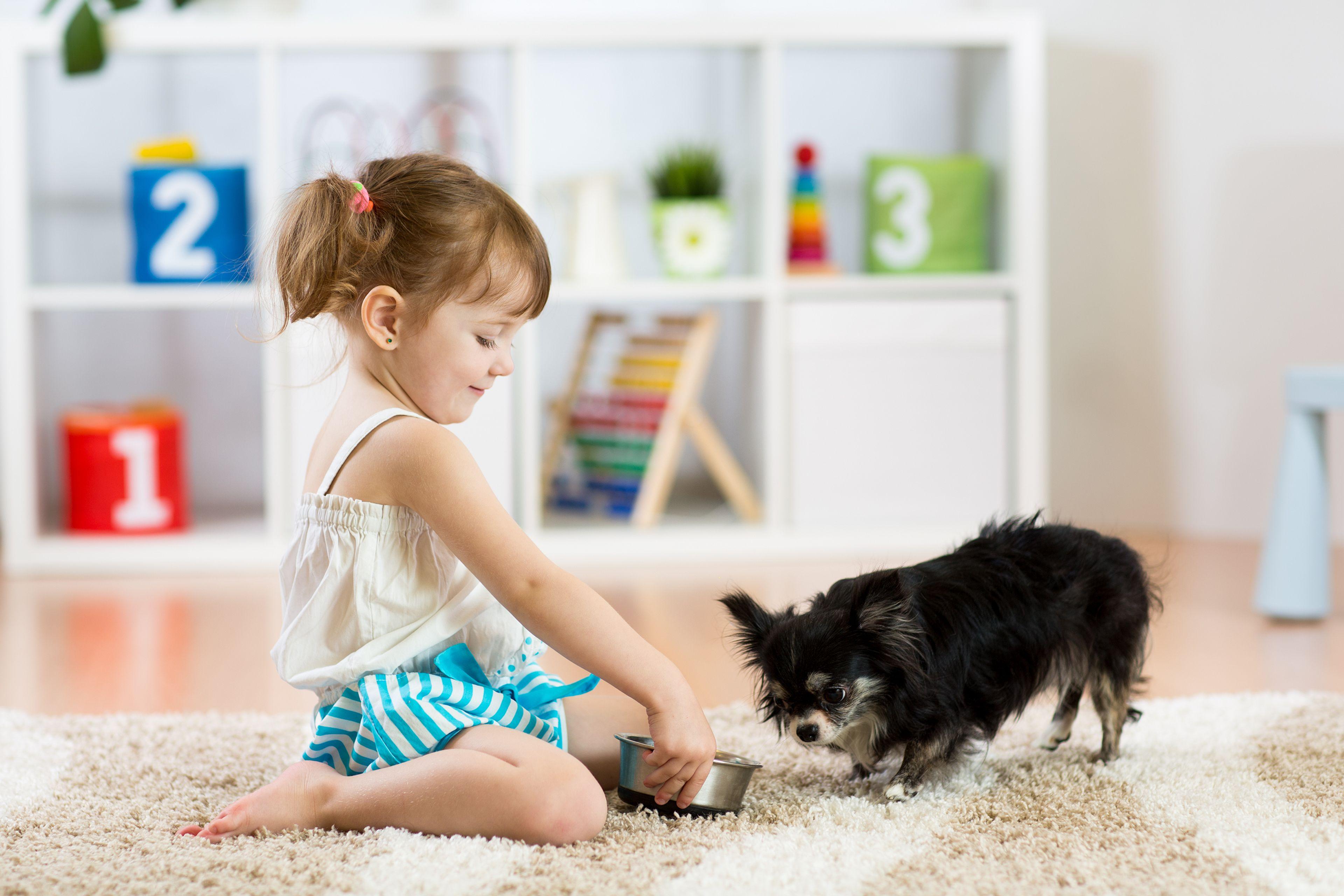 bambina dà da mangiare al cane