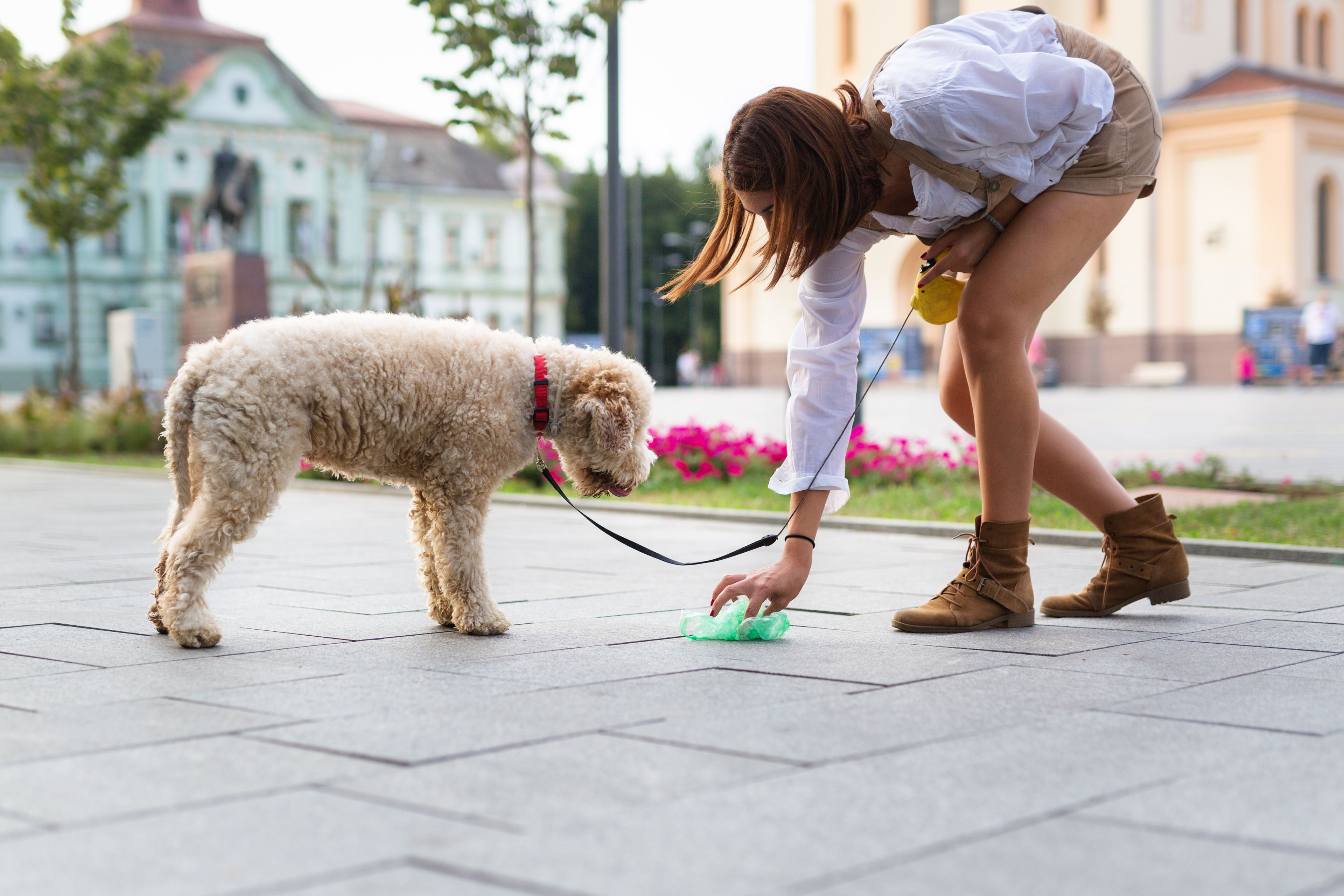 raccogliere i bisogni del cane