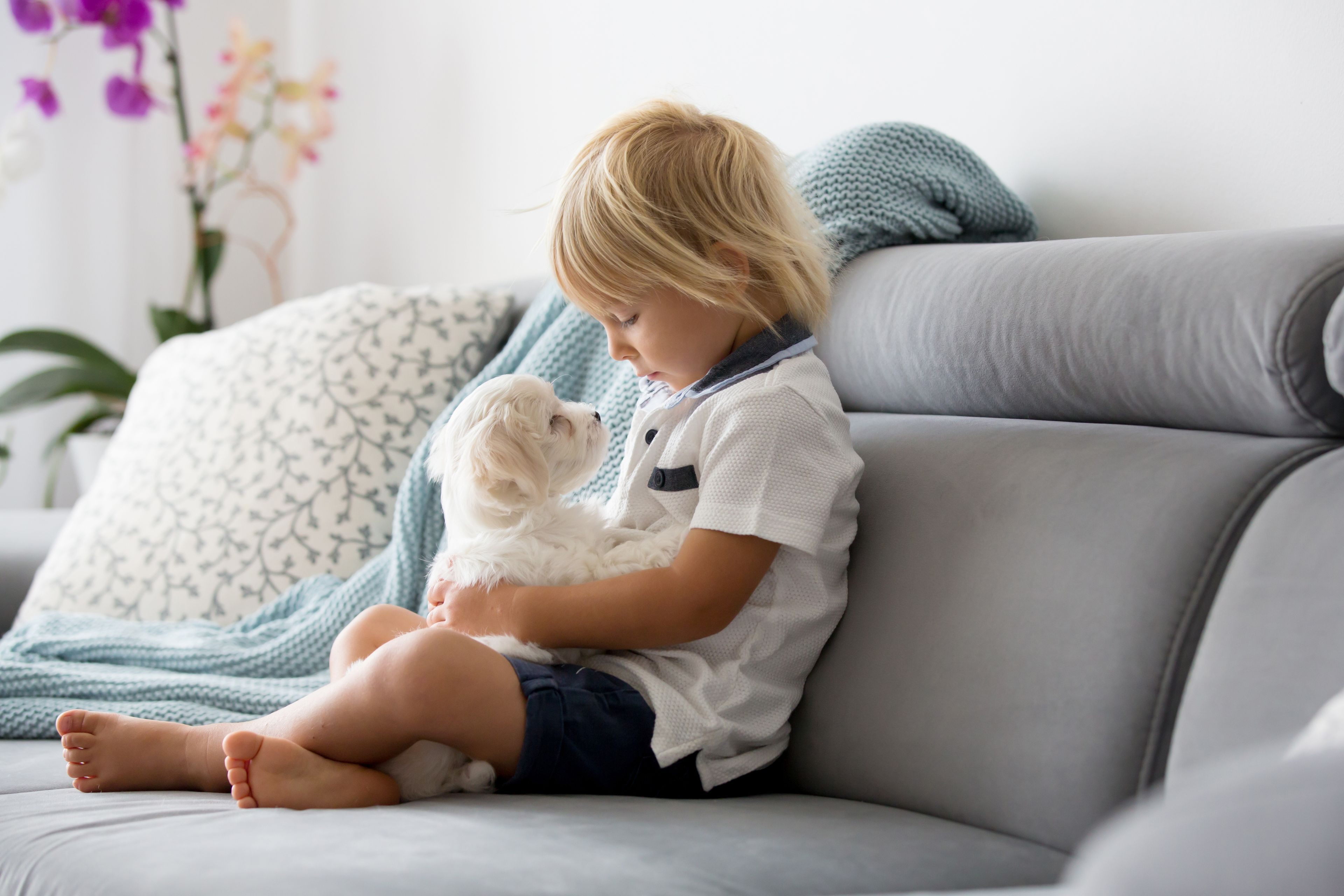 bambino con cane maltese