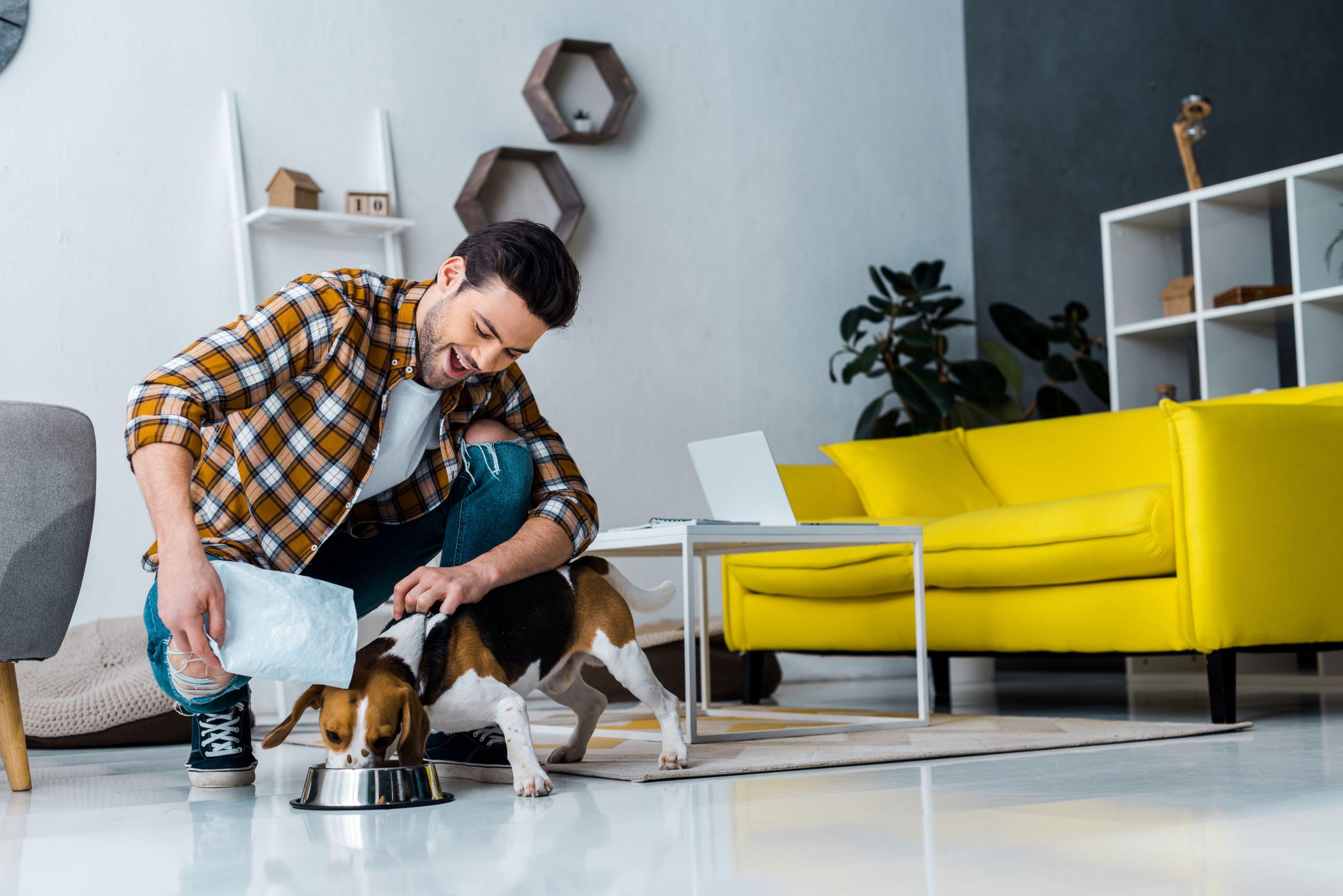 cane mentre mangia la pappa