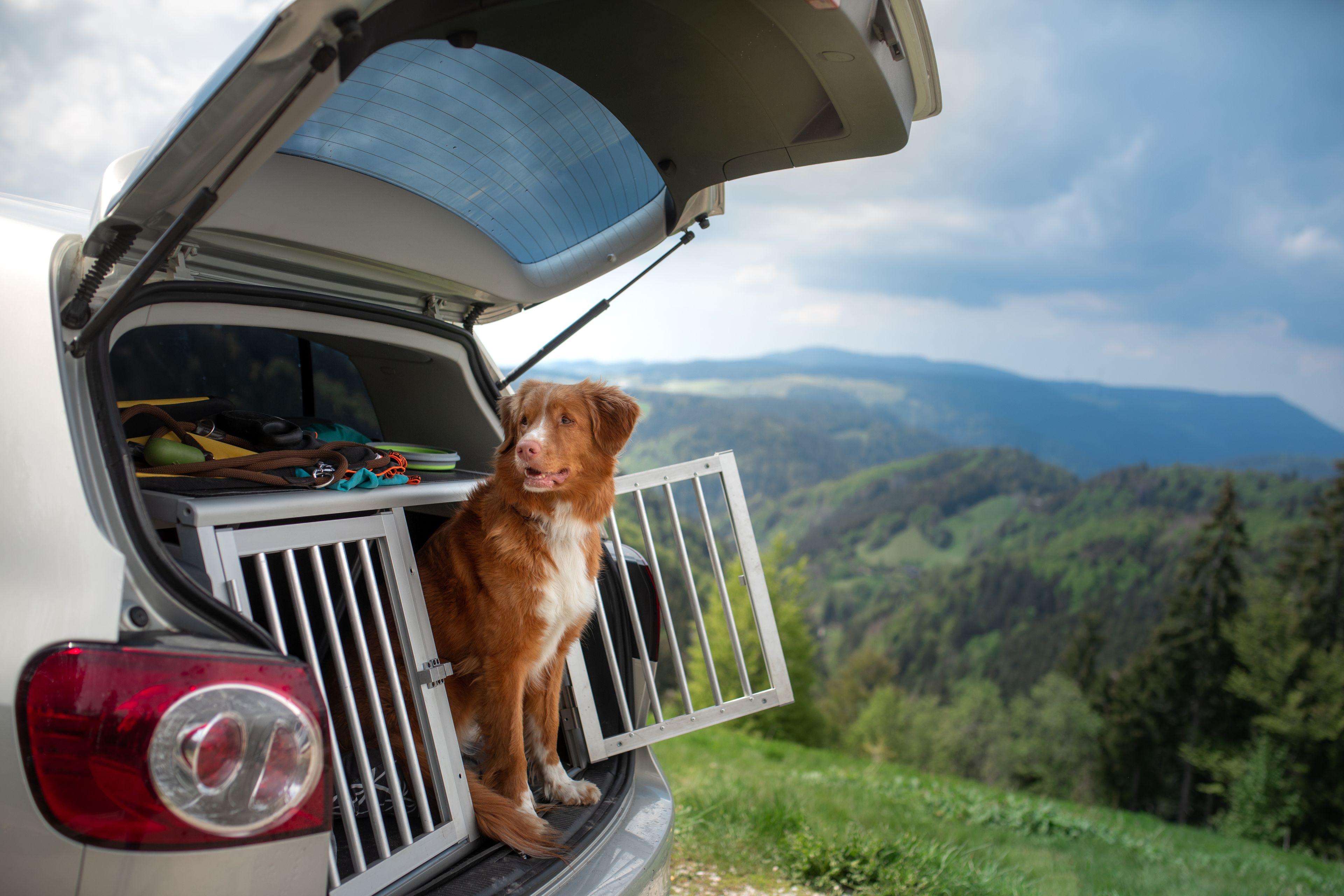 cane nella gabbia da trasporto