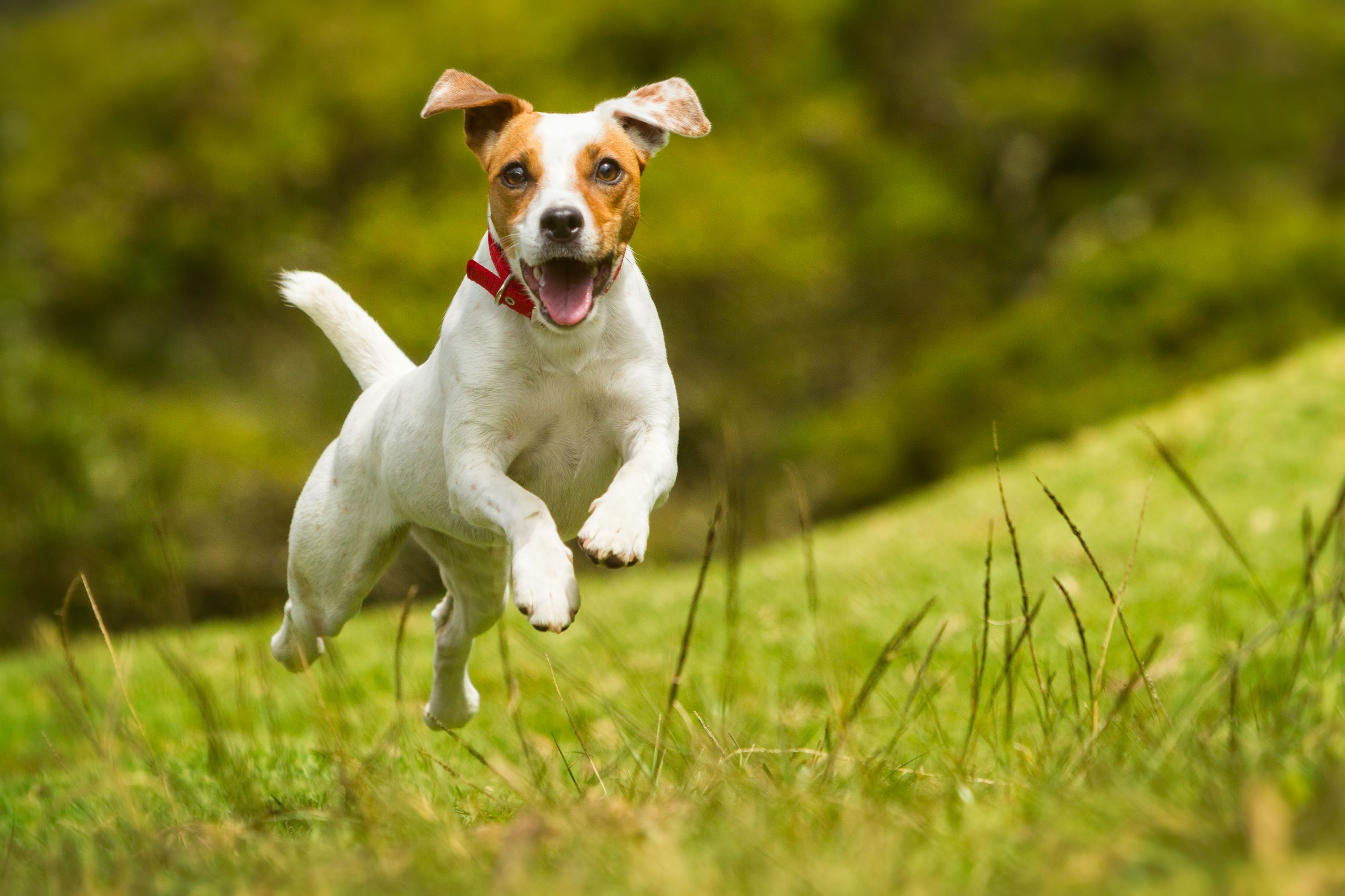 un cane che saltella felicemente