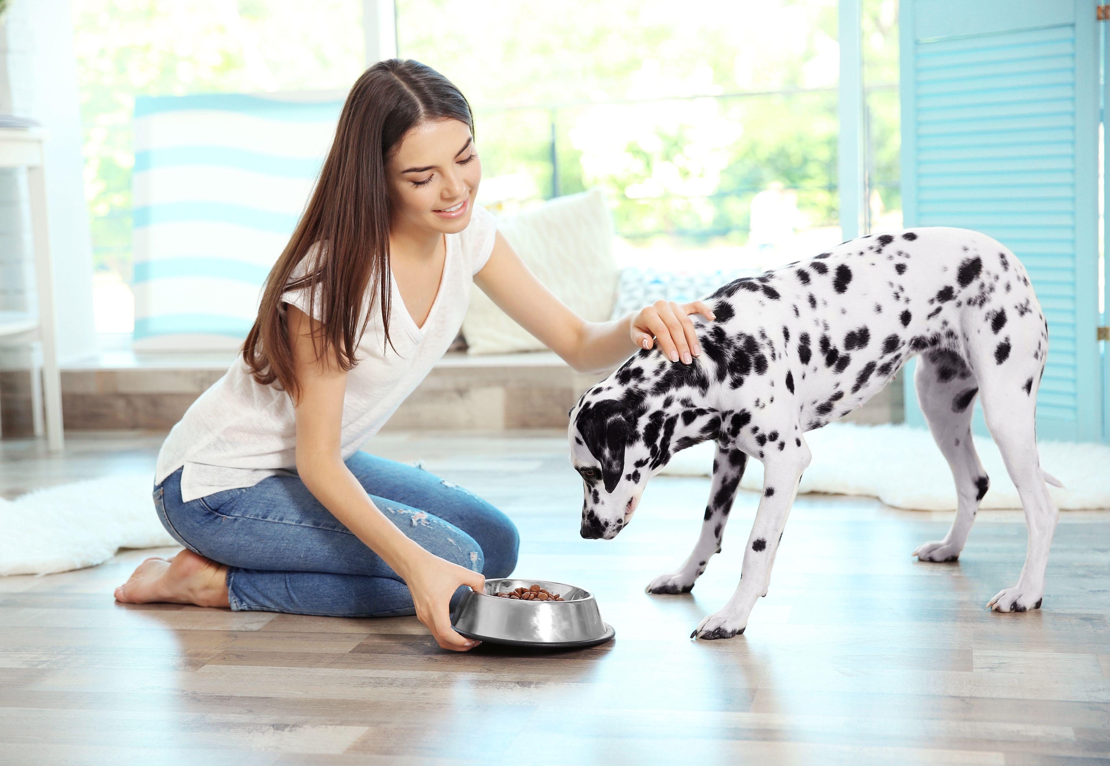 cane che si prepara a mangiare