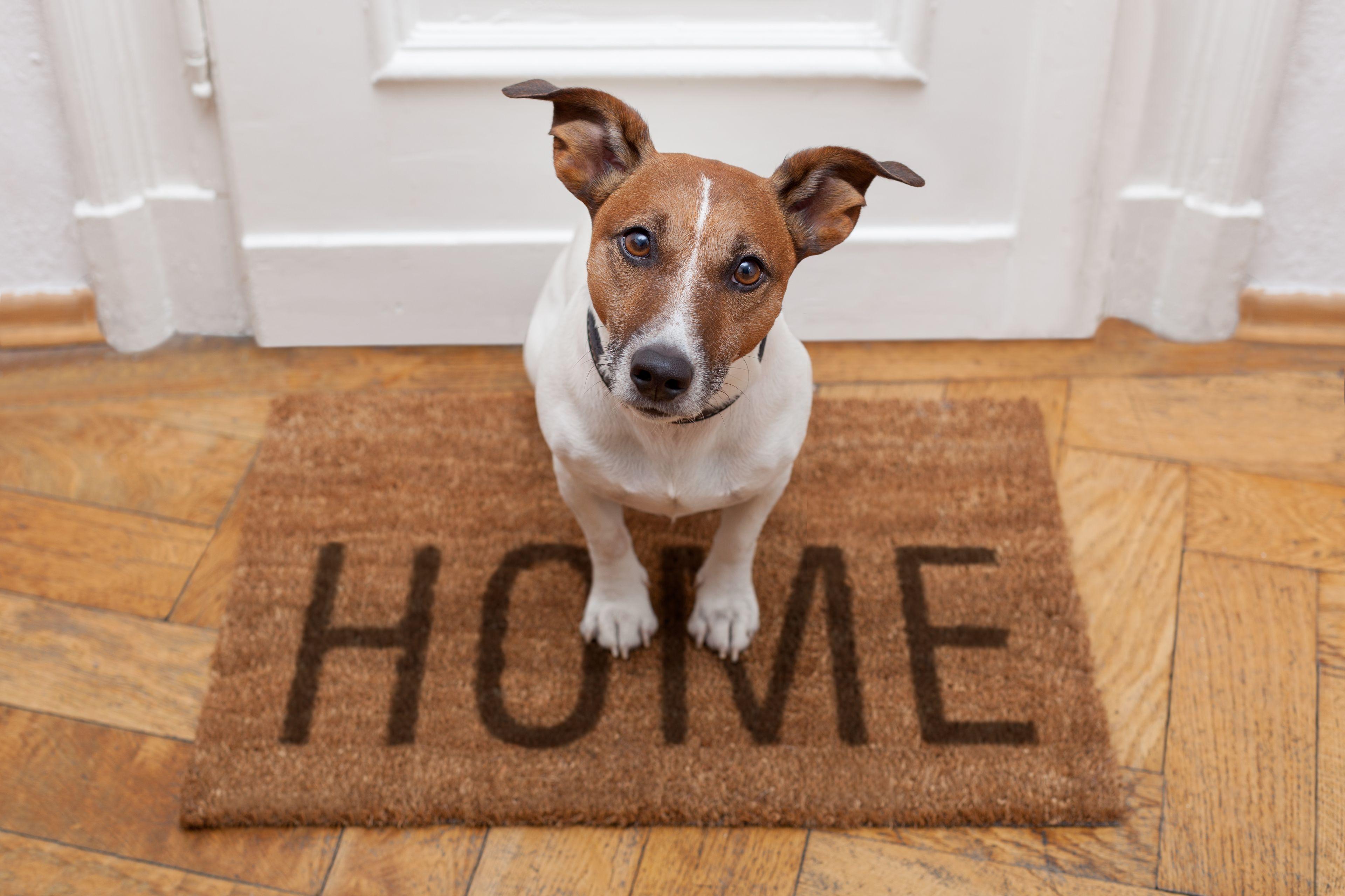 cane a casa che attende il padrone