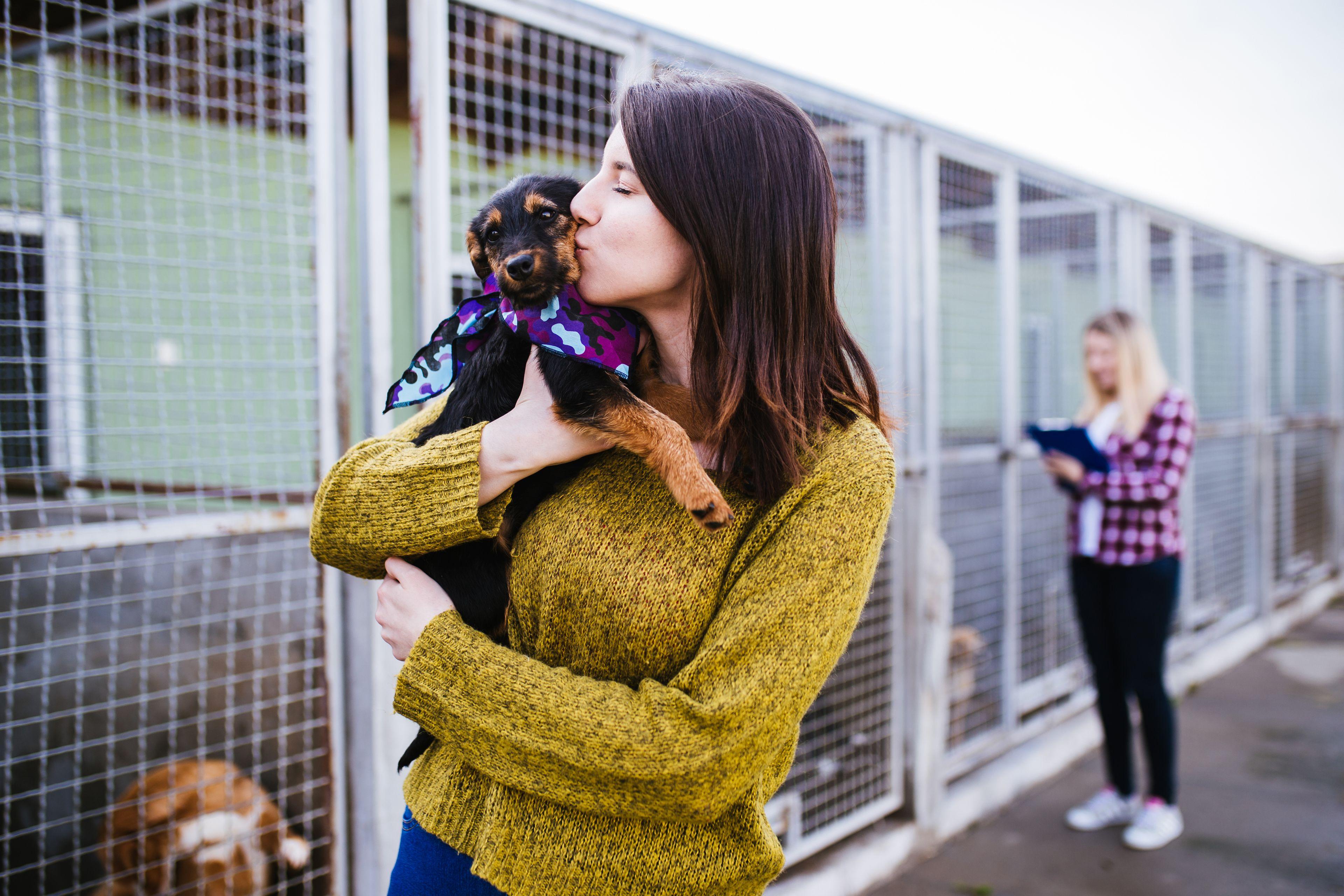 scelta del cane da adottare