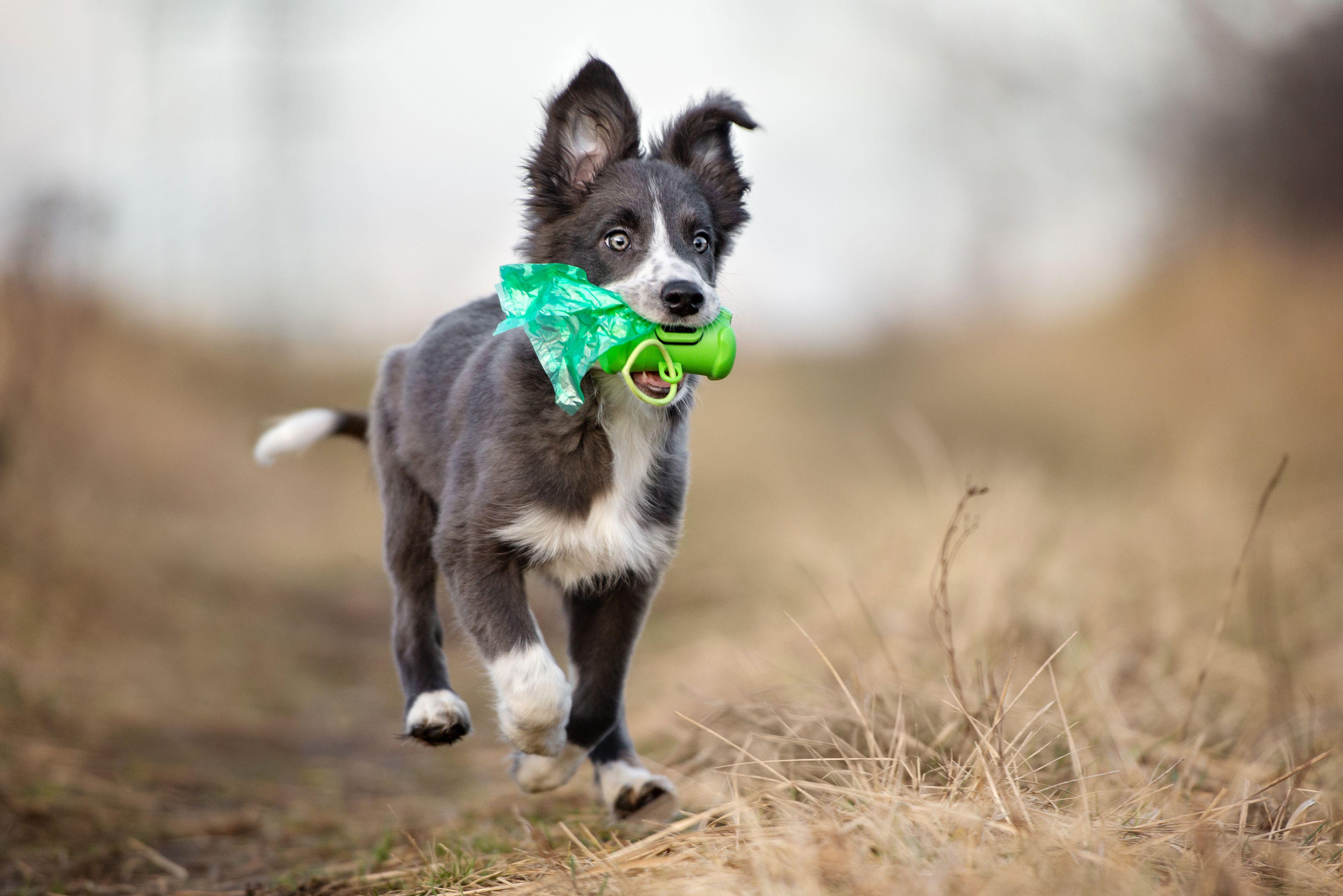 cucciolo che passeggia felice