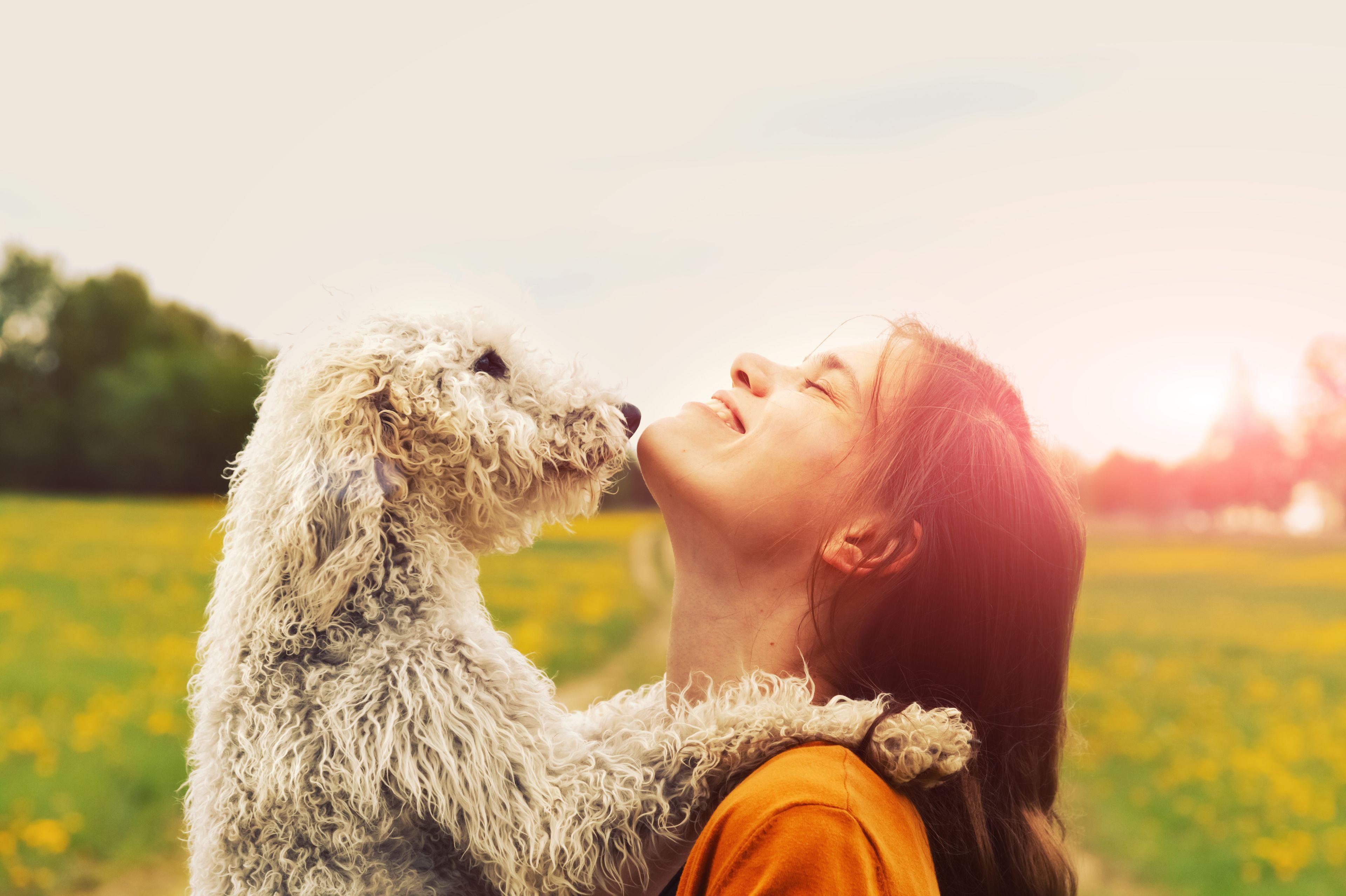 cane felice con padrone