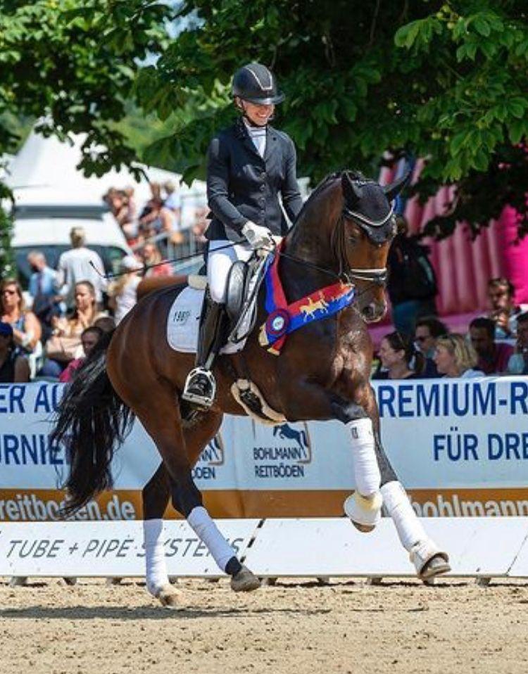 brandi roenick with breeding stallion Debutant PS OLD Bundeschampionate Final