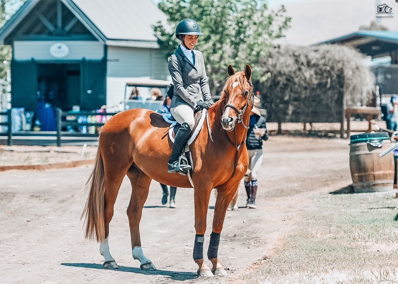 erin lane equestrian and her horse