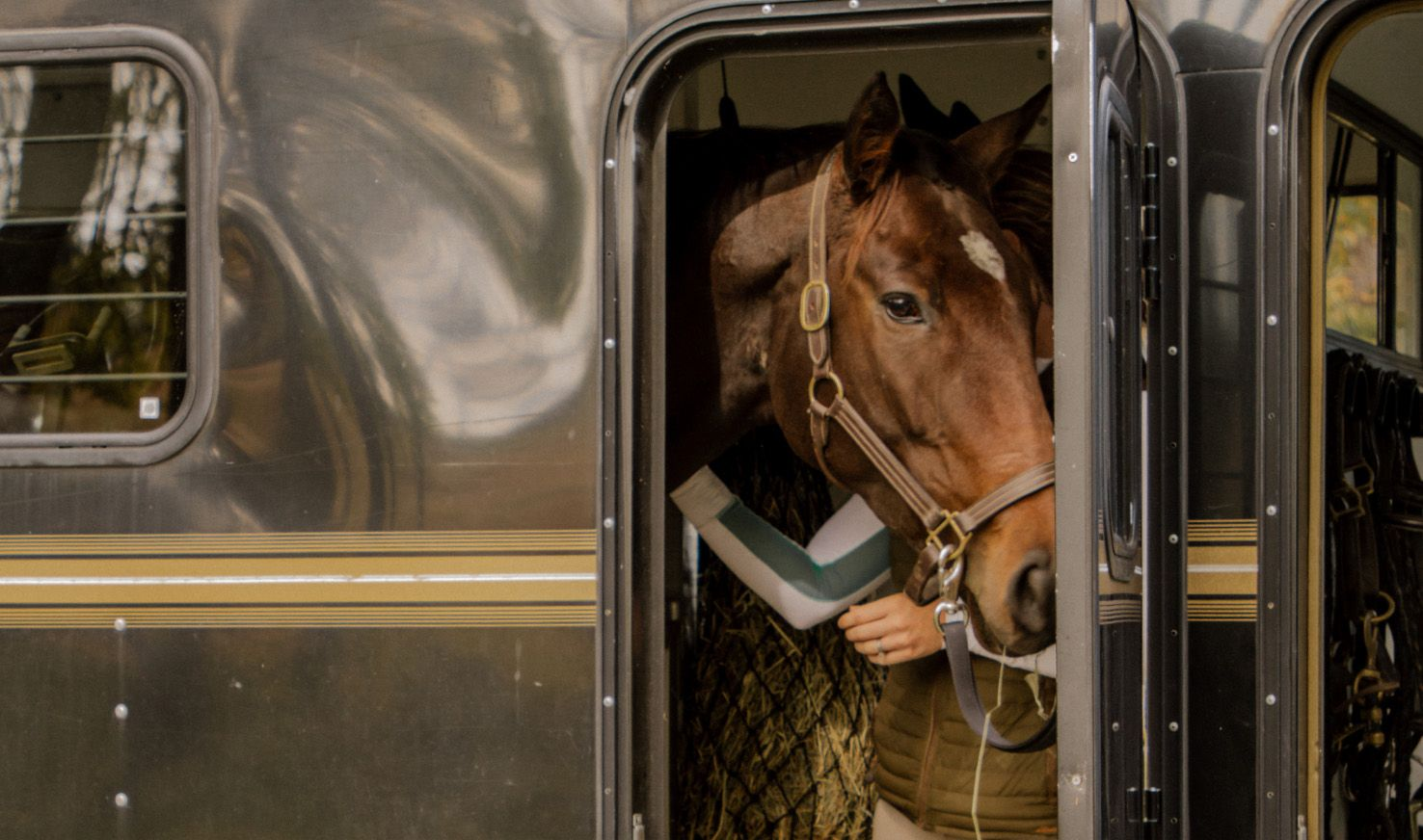 horse walking out of trailer