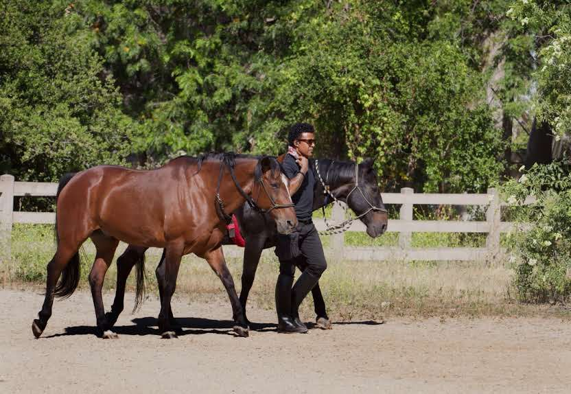 canine expert Brandon Fouche with his two horses